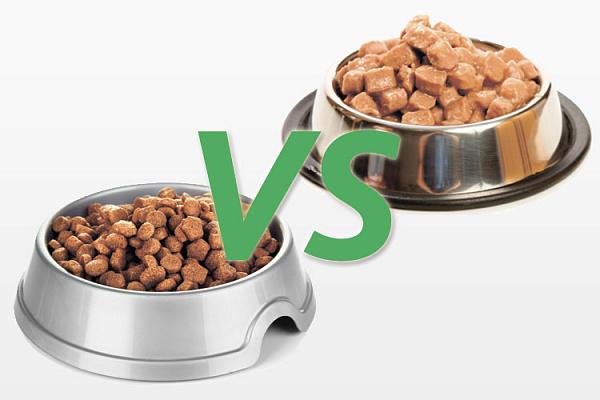 Можно ли сочетать влажные и натуральные корма
