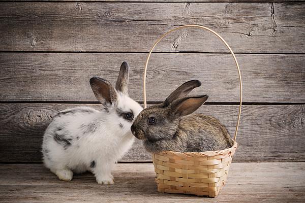Знакомств кроликов сайт