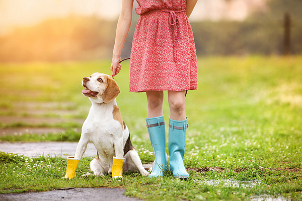 """Картинки по запросу """"собаки и весна"""""""